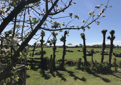 Uitzicht vanuit de boomgaard in de lente